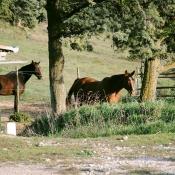 Paddocks chevaux