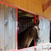 Boxes chevaux