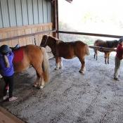 Aire de préparation des poneys